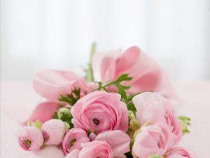 bunga, daun berwarna hijau, bunga berwarna pink