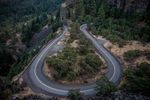 jalan, jalur berbeda, pohon, hutan
